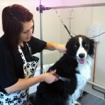 Flossie being pampered